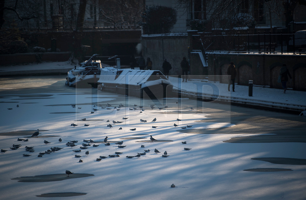 © Licensed to London News Pictures. 28/02/2018. London, UK. Birds sit on a frozen canal in Little Venice, West London following heavy snowfall last night. Large parts of the UK are experiencing disruption as 'Storm Emma' hits, following Russian a cold front earlier in the week named 'The Beast From The East'. Photo credit: Ben Cawthra/LNP