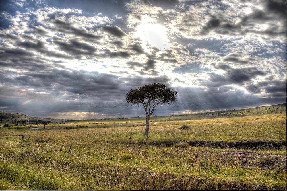Sun shining down on a lone acacia tree