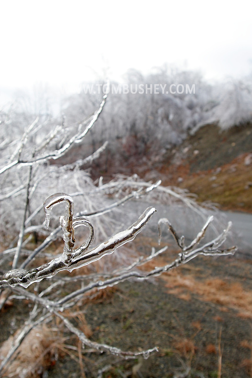 Greenville, NY - Trees branches are covered in ice after an ice storm on Dec. 14, 2008.