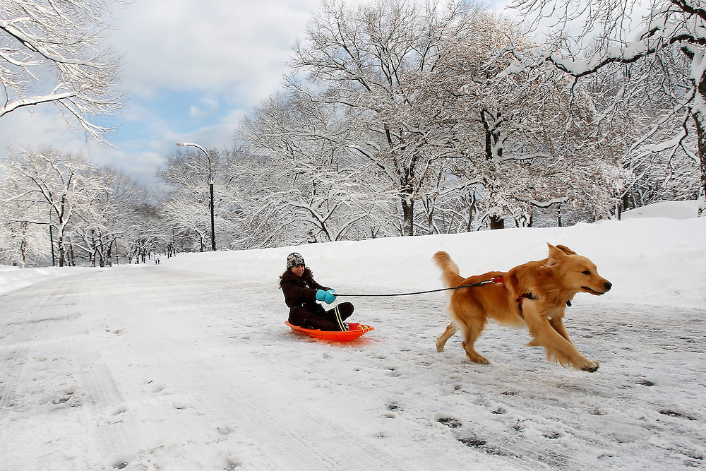 13 years old Olivia riding a snow slade pulled by dog Simba in Central Park  on January 27, 2011 in New York City..Photo by Joe Kohen for The Wall Street Journal
