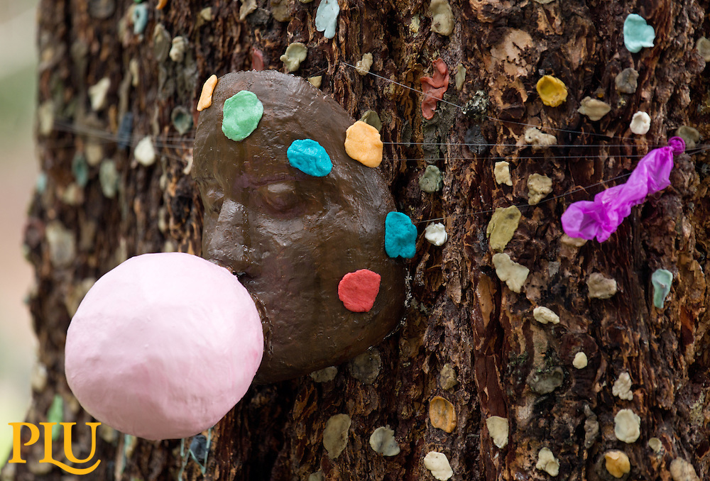 Sculpture in the gum tree at PLU on Thursday, March 7, 2013. (Photo/John Froschauer)