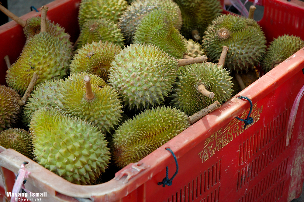 Asia's strong smelling durian
