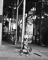 2 Sweet Pitbulls waiting for their human outside NYC eatery.