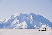 USA, Alaska, Sled Dogs, Dog Sledding, Denali National Park
