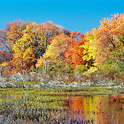 Great Meadows National Wildlife Refuge, Sudbury, Massachusetts