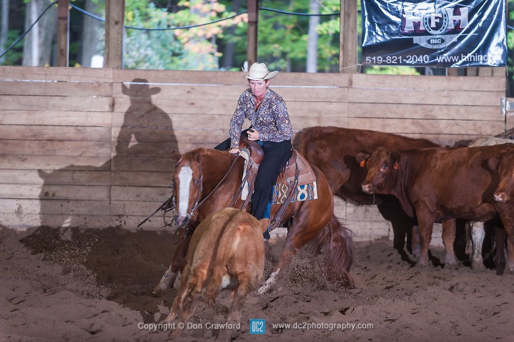 September 24, 2017 - Minshall Farm Cutting 6, held at Minshall Farms, Hillsburgh Ontario. The event was put on by the Ontario Cutting Horse Association. Riding in the $2,000 Limited Rider Class is Lisa Hall on Quixote Lena Pepto owned by the rider.