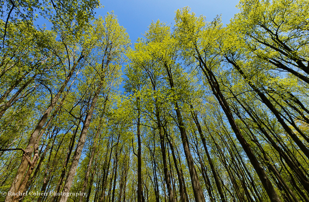 &quot;Springing Up&quot;<br />