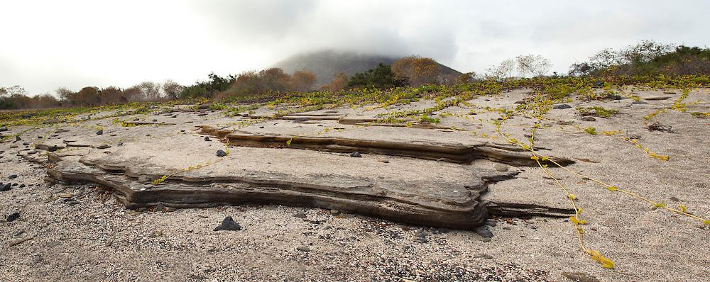 Interesting rock erosion along the shore of of Santiago Island, Galapagos Archipelago - Ecuador.
