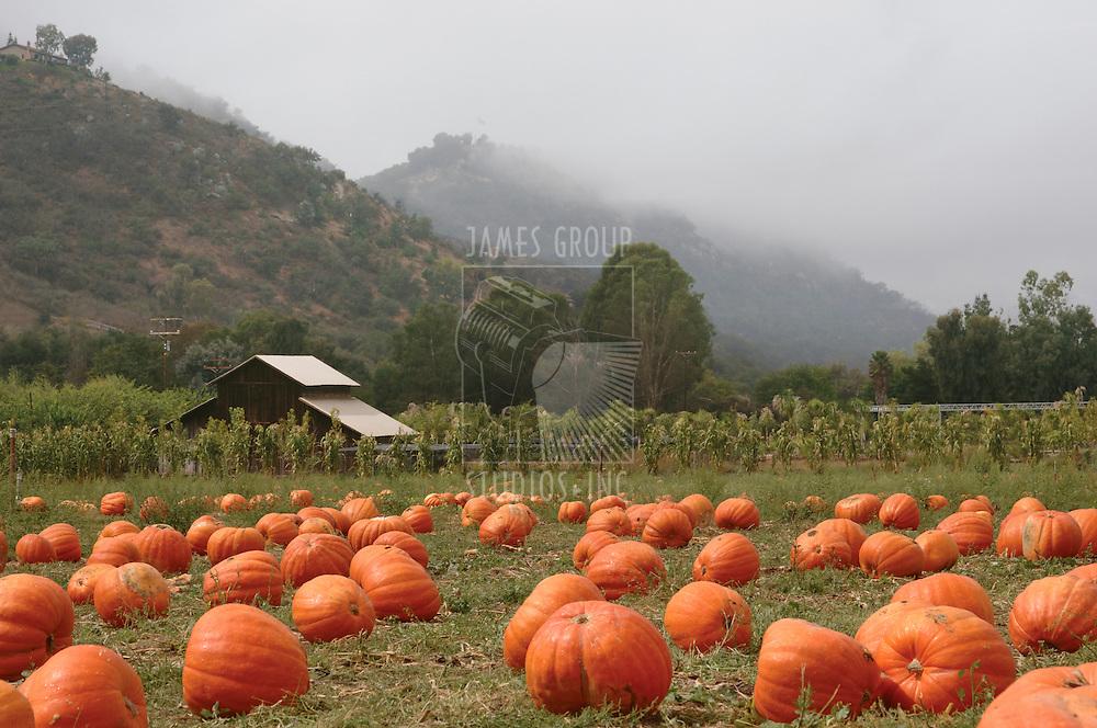 Landscape orientation of a pumpkin patch in October