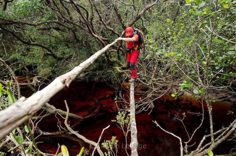 """AUYANTEPUY, VENEZUELA. Excursionistas durante travesía del tepuy. El Auyantepuy es el mayor de los tepuis del Parque Nacional Canaima. En sus 700 kms2 alberga el salto angel o conocido por lengua indígena Pemon como """"Kerepacupai Vena; es la caída de agua más grande del mundo con sus 979 metros de altura. (Ramon lepage /Orinoquiaphoto/LatinContent/Getty Images)"""
