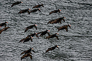 wildlife birding photographs Hains, AK