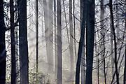 Nederland, Groesbeek, 17-7-2017Door optrekkende mist en waterdamp wodrt het zonlicht gebroken en maakt een geheimzinnige sfeer in het bos. Door de bomen het bos niet meer zien. Het bos wordt door veel mensen gebruikt als plek voor recreatie. Het Rijk van Nijmegen kent een gevarieerd landschap en is rijk aan bossen. FOTO: FLIP FRANSSEN
