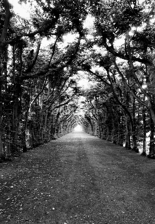 A tree lined path.