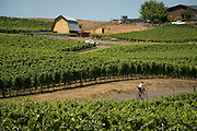 Bicycling Oregon Wine country, Willamette Valley, Oregon