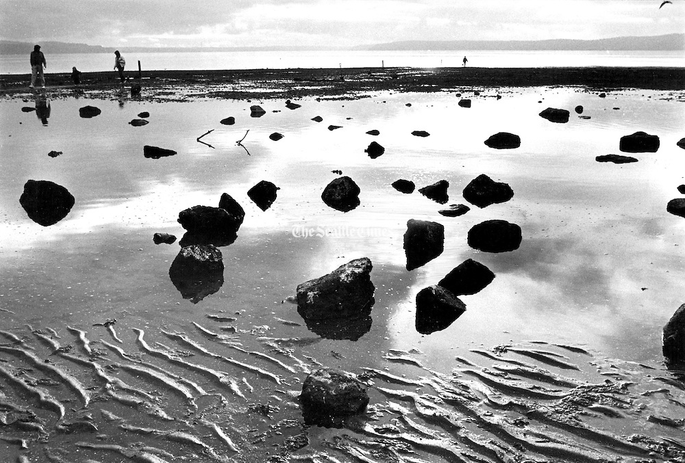 Low tide at Salt Water State Park makes it easy for visitors to comb the beach in search of crabs. (Chien Chi Chang / The Seattle Times, 1991)
