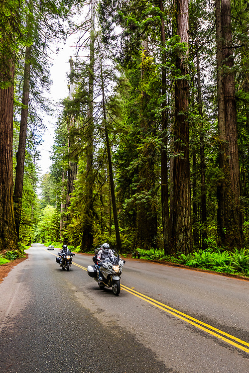 Motorcyclists passing trhough Redwood forests along the Newton B. Drury Scenic Parkway in Prairie Creek Redwoods State Park, part of Redwood National and State Parks, Northern California USA.