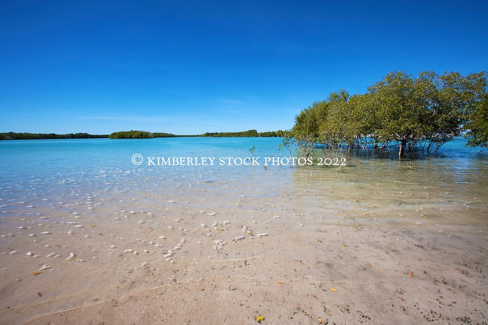 Mangroves Barred Creek