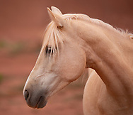 Monument Valley, horse, Arizona