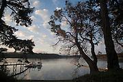 Madrona tree, Henry Island, San Juan Islands, Washington State<br />
