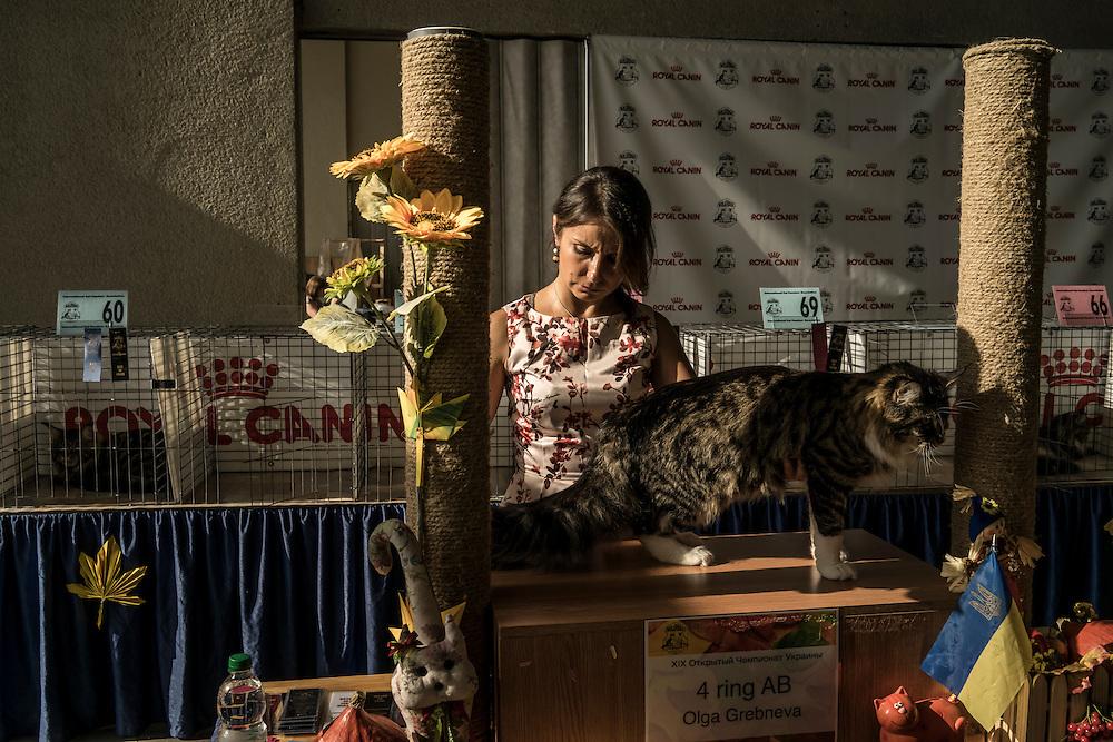 A cat exhibition on Sunday, September 20, 2015 in Kyiv, Ukraine.