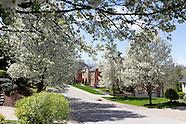 Spring Trees - Vanderbilt Dr