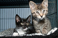 This is Oreo and Tiger from the Chemung SPCA