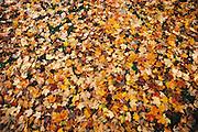 Autumn leaves on ground.