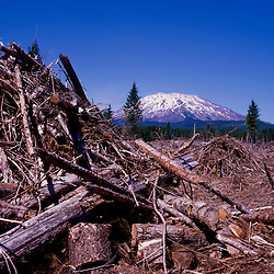 Logging Debris on South Side of Mt. St. Helens, Mt. St. Helens National Volcanic Monument, Washington, US
