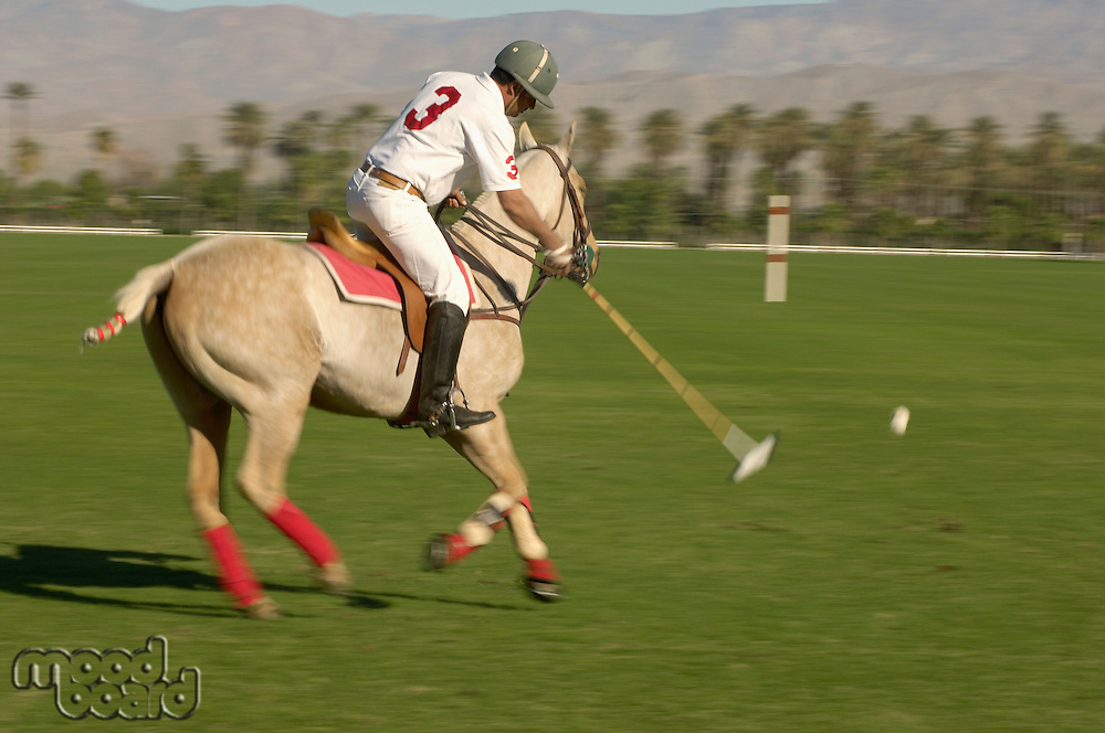 Polo Player leaning down from polo pony Advancing Ball on polo field during match side view