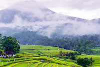 Bali, Tabanan, Jatiluwih. At 700m altitude, with beatiful terraced paddy fields. Low clouds. Jatiluwih is surrounded by high mountains and rainforest, which causes a wet climate.
