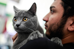 61080071<br /> An attendee holds his Chartreux cat during the International Feline Exhibition, in Bogota, capital of Colombia, on Feb. 16, 2014. About 100 breeds of cats were presented during the International Feline Exhibition held in Bogota. Sunday, 16th February 2014. Picture by  imago / i-Images<br /> UK ONLY