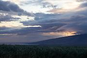 Maui.Sugar cane fields at dusk.