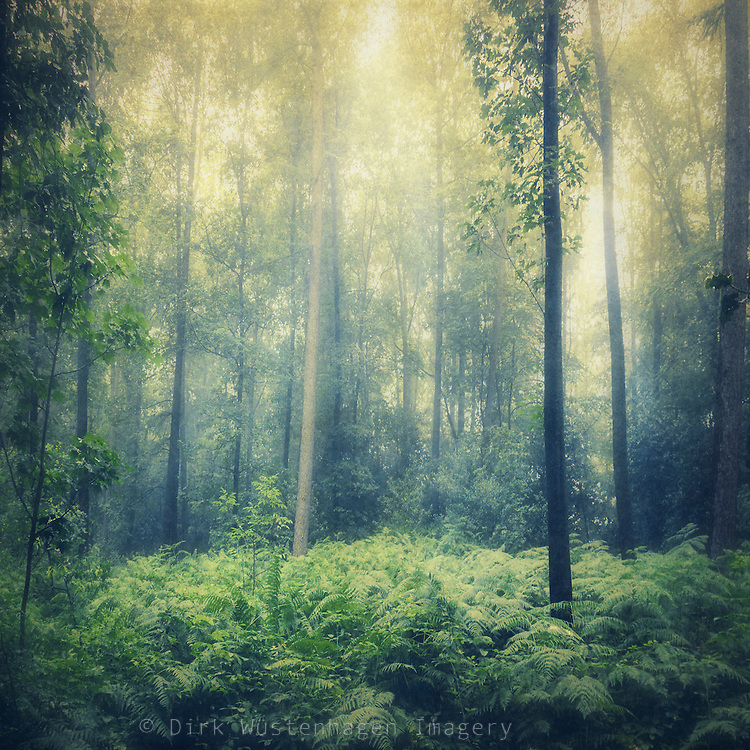 Forest in hazy morning light on a summer day.<br />