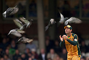 Captain Ricky Ponting fielding amongst the pigeons during the ICC World Twenty20 Cup match between Australia and West Indies at the Oval. Photo © Graham Morris (Tel: +44(0)20 8969 4192 Email: sales@cricketpix.com)