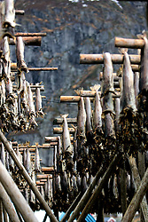 NORWAY LOFOTEN 29MAR07 - Stockfish racks in the traditional fishing village of � on the Lofoten islands...jre/Photo by Jiri Rezac..© Jiri Rezac 2007..Contact: +44 (0) 7050 110 417.Mobile:  +44 (0) 7801 337 683.Office:  +44 (0) 20 8968 9635..Email:   jiri@jirirezac.com.Web:    www.jirirezac.com..© All images Jiri Rezac 2007 - All rights reserved.