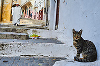 Maroc, Tanger, chat dans la Medina // Morocco, Tangier (Tanger), cat on the Medina (old city)