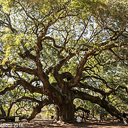 Angel Oak Park, Johns Island, Charleston SC