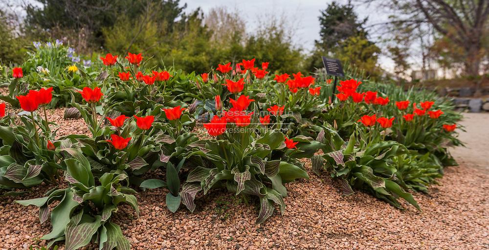 plantasia garden in spring