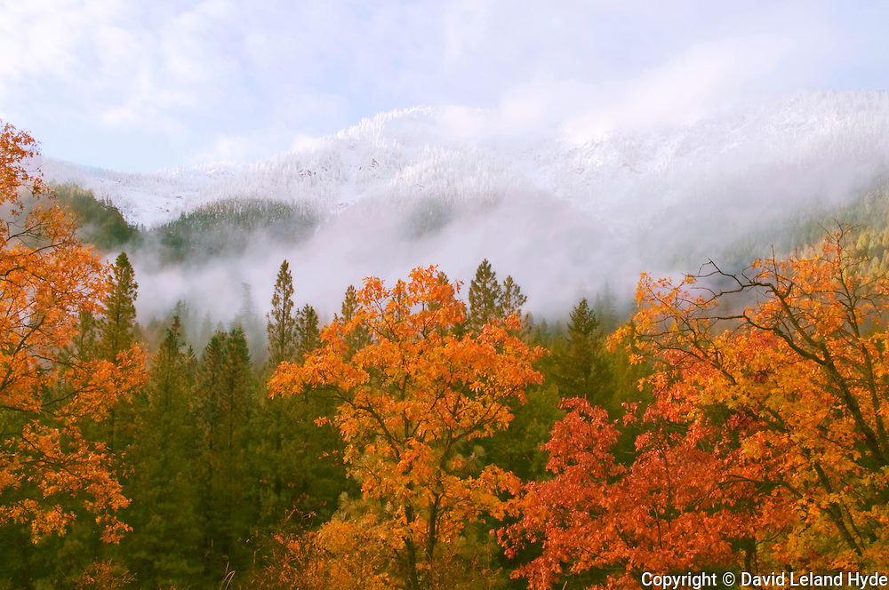 Oak Trees, Grizzly Ridge, Fall, Snow Scene, Plumas National Forest, Sierra Nevada, California Mountains, copyright 2012 David Leland Hyde.