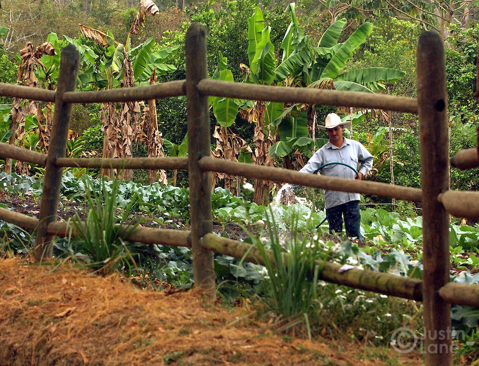 A farmer is seen tending to the organic garden at the Blancaneaux Lodge, one of Francis Ford Coppola's resorts, in the eastern part of Belize. The lodge grows 85% of it's own food.<br />JUSTIN LANE FOR THE NEW YORK TIMES