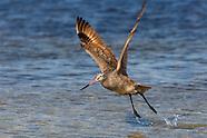 BEAUTY OF FLIGHT: BIRDS ALONG THE SEACOAST