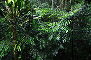 Rain in forest<br /> Yasuni National Park, Amazon Rainforest<br /> ECUADOR. South America<br /> HABITAT & RANGE: