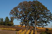 Decouvert Vineyard, Dundee Hills AVA, Willamette Valley, Oregon