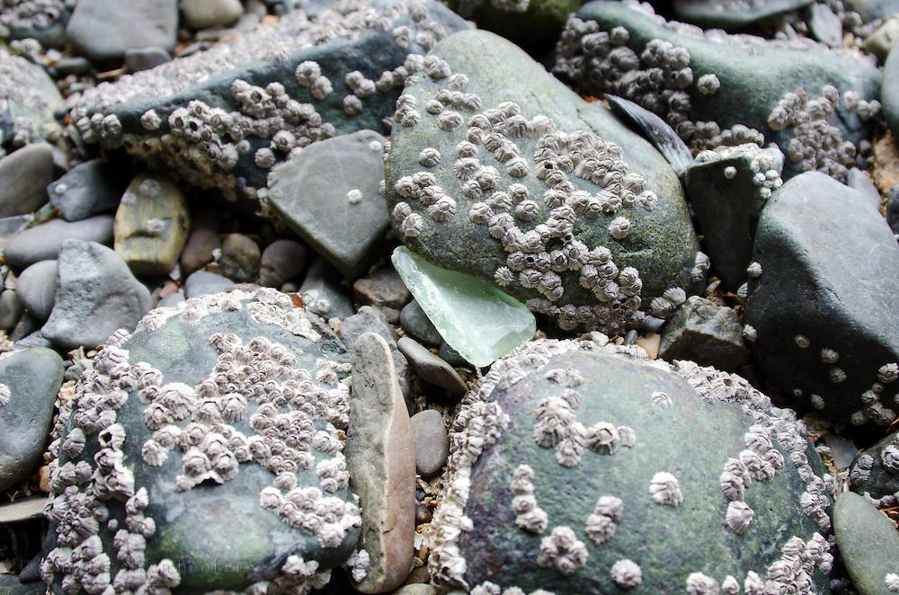Pale green sea glass on a rocky Maine beach.