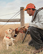 Keith Crowley and his Yellow Lab, Rosie, pheasant hunting in North Dakota.