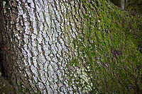 Close up to tree trunk with moss