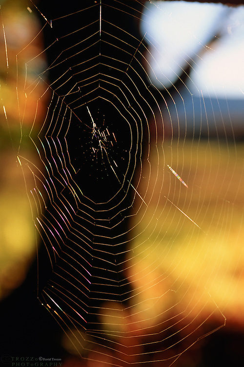 The sun brightens a spider web early in the morning at Canaan Valley State .Park. The park is located in the Allegheny Mountains of Tucker County, West Virginia, offers scenic beauty and plenty of outdoor recreation including hiking, biking, and cross country skiing.