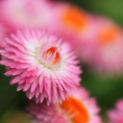"""Dreaming in Color""<br />