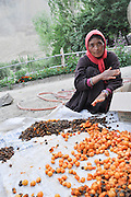 woman pitting apricots before preserving them in the sun India, Jammu and Kashmir, Ladakh, Leh