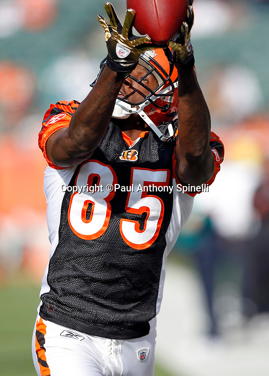 Cincinnati Bengals wide receiver Chad Ochocinco (85) catches a pregame pass during the NFL week 8 football game against the Miami Dolphins on Sunday, October 31, 2010 in Cincinnati, Ohio. The Dolphins won the game 22-14. (©Paul Anthony Spinelli)
